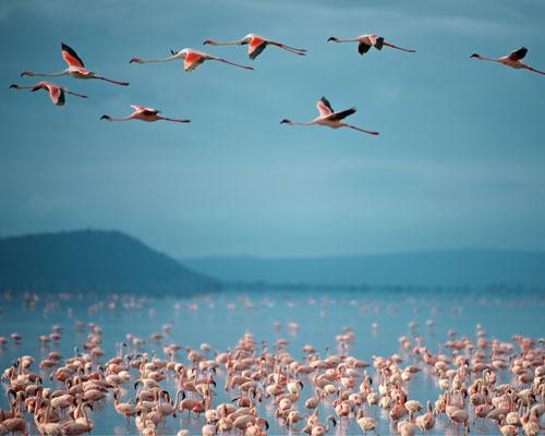 Lake Manyara 1