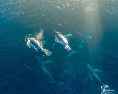 Whale Watching Zanzibar