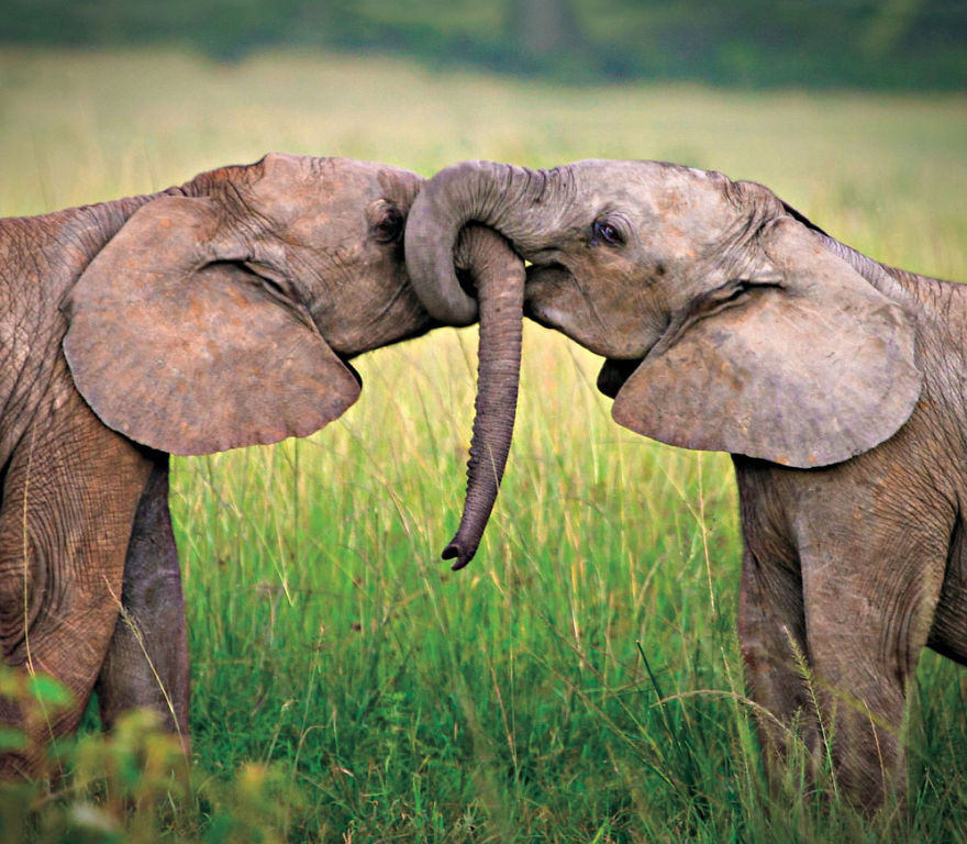5 Photos That Show Love between Wild Animals